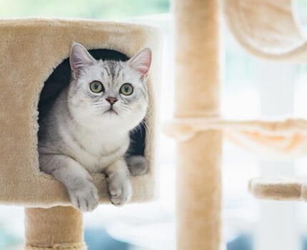 猫カフェ Cat tail